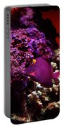 Colors Of Underwater Life Portable Battery Charger by Clayton Bruster