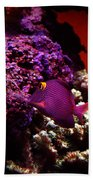 Colors Of Underwater Life Beach Towel by Clayton Bruster