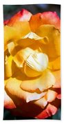 Red Tipped Yellow Rose Beach Towel