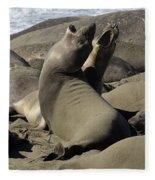 Seal Duet Fleece Blanket