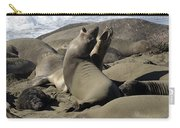 Seal Duet Carry-all Pouch by Bob Christopher