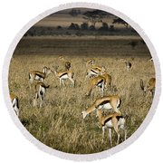 Herd Of Antelope Round Beach Towel by Darcy Michaelchuk