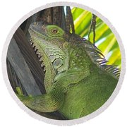 Iguana Puerto Rico Round Beach Towel