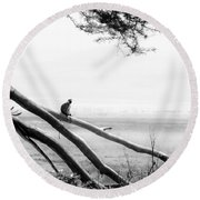 Monkey Alone On A Branch Round Beach Towel