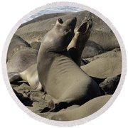 Seal Duet Round Beach Towel