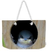 Barn Swallow Chick Weekender Tote Bag by DigiArt Diaries by Vicky B Fuller