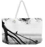 Monkey Alone On A Branch Weekender Tote Bag