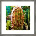 Backlit Cactus Framed Print