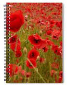 Red Poppies 4 Spiral Notebook
