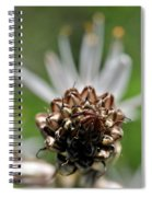 at Lachish 1 Spiral Notebook