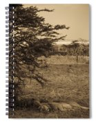 Male Lions Snoozing In Shade Spiral Notebook