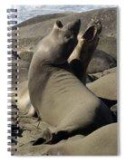 Seal Duet Spiral Notebook