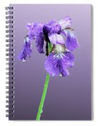 Wet Russian Iris Spiral Notebook
