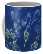 A Close View Of Marine Phytoplankton Coffee Mug by Bill Curtsinger