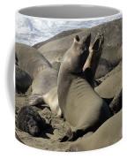 Seal Duet Coffee Mug by Bob Christopher