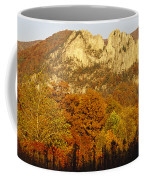 Sycamore And Oak Trees At Sunset Coffee Mug by Raymond Gehman