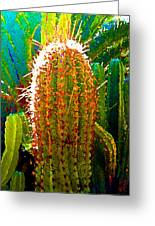 Backlit Cactus Greeting Card