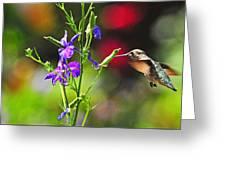 Springtime Hummer Greeting Card