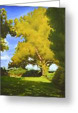 Sycamore Greeting Card
