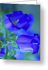 Blue Bell Flowers Greeting Card
