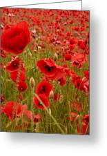 Red Poppies 4 Greeting Card