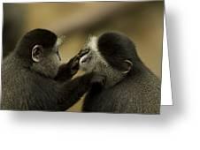 A Blue Monkey Cercopithecus Mitis Greeting Card by Joel Sartore