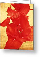 Gladiola Greeting Card by Cathie Tyler