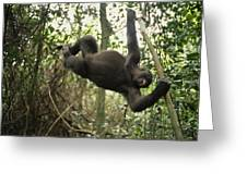 A Gorilla Swinging From A Vine Greeting Card