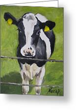 A Heifer Greeting Card