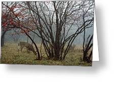 A White-tailed Deer Forages Greeting Card by Raymond Gehman