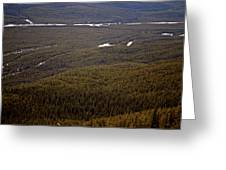 Banff National Park Forest Greeting Card