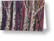 Big Trees Keep On. . . Greeting Card