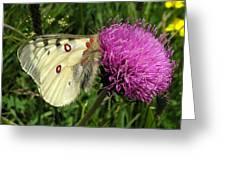 Blancarosa Greeting Card