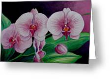 Borneo Orchid  Greeting Card