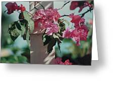 Bouganvillea Greeting Card