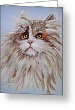 Cat Of Many Colors Greeting Card