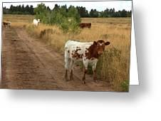 Colorado Calf Greeting Card