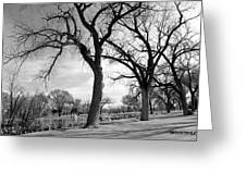 Duck Pond In March Greeting Card