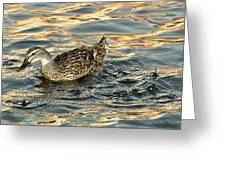 Duck Tracy Greeting Card