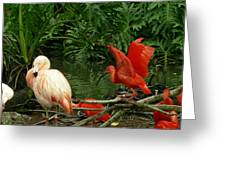 Flamingo And Scarlet Ibis Greeting Card