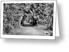 Forest Tunnel Greeting Card