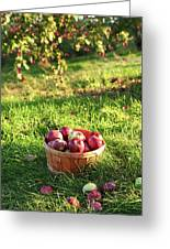Freshly Picked Apples In The Orchard  Greeting Card