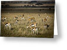 Herd Of Antelope Greeting Card by Darcy Michaelchuk