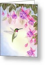 Hummingbird With Fuchsia Greeting Card