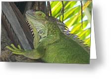 Iguana Puerto Rico Greeting Card