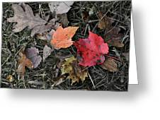 Leaves Are Falling Greeting Card