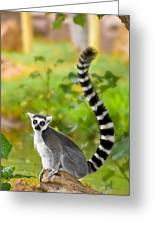 Lemur Lemur Greeting Card