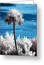 Lonesome Palm Greeting Card by Bob Pomeroy