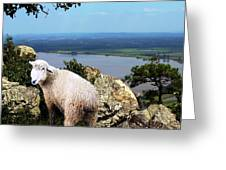 Lost Sheep Greeting Card