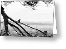 Monkey Alone On A Branch Greeting Card